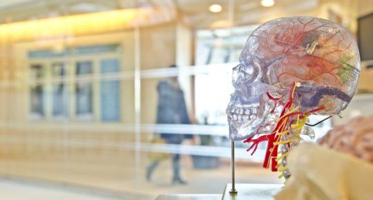 Cerveau ou cerveaux