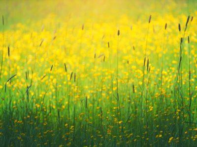 Naturopathie : Art de vivre et art de santé