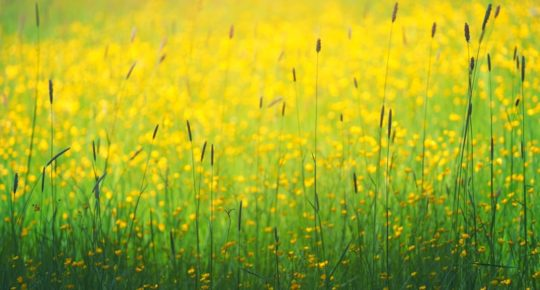 Naturopathie et nature