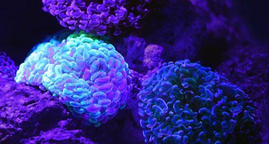 Renforcer et stimuler son système immunitaire